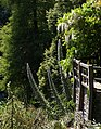 Echium and Wisteria, Coleton Fishacre - geograph.org.uk - 1352474.jpg