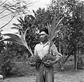 Een arbeider met twee jonge kokospalmen in de palmentuin in Coronie, Bestanddeelnr 252-5660.jpg
