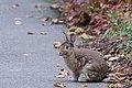 Een playboy Bunny in het Zuiderpark - Den Haag (8092642759).jpg