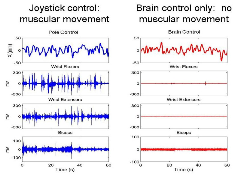 File:Electromyograms comparing monkey's control of telerobotic arm via joystick and brain control only.tiff