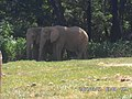 Elefante Zoo-Botânica de BH - MG.jpg