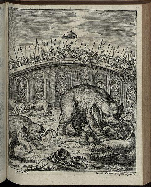 File:Elephantographia Curiosa 183.jpg