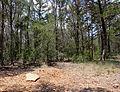 Eloise woods 2011.jpg