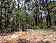 Natural burial - Wikipedia