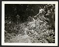 Entrance to Chilibrillo Cave, on Madden Dam Road, C.Z., 13 February 1935 (22281353723).jpg