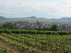 View of Entrena. At foreground its vineyards