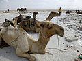 Ethiopie-Exploitation du sel au lac Karoum (20).jpg