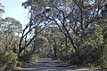 Evans Lookout Road, Blackheath, Australia 05.jpg
