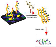 Whole Genome Sequencing Identifies New >> Exome Sequencing Wikipedia