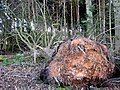 Fallen tree - geograph.org.uk - 642667.jpg