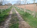Farm track to the Kempley lane - geograph.org.uk - 769285.jpg