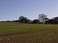 Farmland, Oare Hill - geograph.org.uk - 282686.jpg