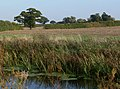 Farmland alongside the Grantham Canal - geograph.org.uk - 1039500.jpg