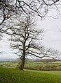 Farmland at the base of Callow Hill - geograph.org.uk - 94184.jpg