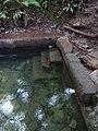 Ffynnon St Dyfnog - St Dyfnog's Well, Llanrhaeadr, Denbighshire, Wales 16.jpg