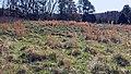 Field Blackwood Farm Park Hillsborough NC 105926 (36094644686).jpg