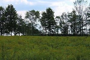 Northmoreland Township, Wyoming County, Pennsylvania - Field and trees in Northmoreland Township