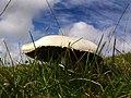 Field mushroom - geograph.org.uk - 544032.jpg