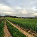 Fields - panoramio (38).jpg