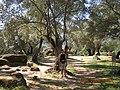"""Filitosa oppidum (avec """"Momument Central"""" au fond).jpg"""