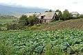 Fioletovo - Armenia (2926149223).jpg