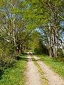 Fischland, Ahrenshoop04.jpg