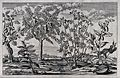 Five Egyptian trees with fruit, including the tamarind, mulb Wellcome V0043170.jpg