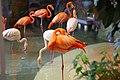 Flamingos (509201449).jpg