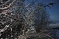 Flocked Bushes - Yellowknife, Canada (5325764288).jpg