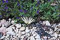Flora fauna Garda.jpg