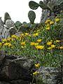 Flora no Morro da Guarita - Torres.jpg