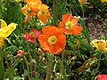Flower-center142453.jpg