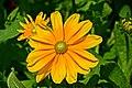 Flower ^2 - Flickr - Stiller Beobachter.jpg