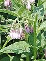 Flower and bee 3.jpg
