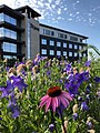 Flowers with Jamf headquarters in the background - Eau Claire, Wisconsin.jpg