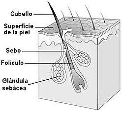 Pelo Wikipedia La Enciclopedia Libre