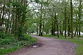 Footpath, Thorndon Country Park - geograph.org.uk - 782753.jpg