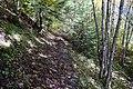 Forêt @ Le Grand-Bornand (51026070827).jpg