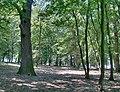 Forest - panoramio - paulnasca (65).jpg