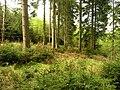 Forest by Černovice, Benešov.jpg