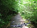 Forest cycling route - panoramio.jpg