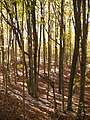 Forest in Mono Cliffs Provincial Park along the Bruce Trail.jpg