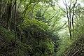 Forest in Mt.Kagoiwa 02.jpg