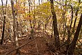 Forest in Mt.Nabeashi 13.jpg