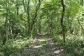 Forest in Mt.Nandai 12.jpg