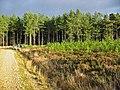 Forestry, near Alderholt, Dorset - geograph.org.uk - 314587.jpg