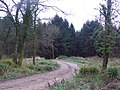 Forestry track in Chedington Woods - geograph.org.uk - 648432.jpg