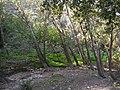 Forrest near Akbara - panoramio.jpg