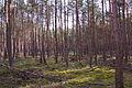 Forst Rundshorn IMG 1749.jpg