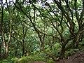 Frodsham - panoramio (3).jpg